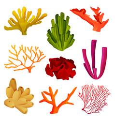 Corals or coral reef elements underwater wildlife vector