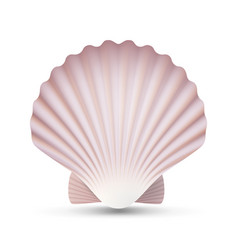 Scallop seashell ocean mollusk sea shell vector