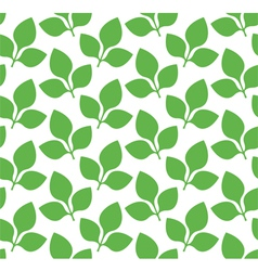Soy vector image vector image