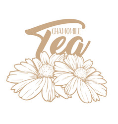 Chamomile tea hand drawn engraving vector