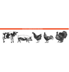 engraved style farm animals collection for vector image
