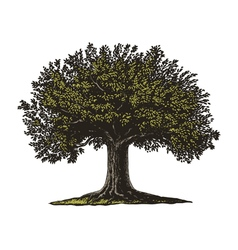 Engraved Tree vector