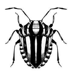 Hand drawn sketch beetle vector