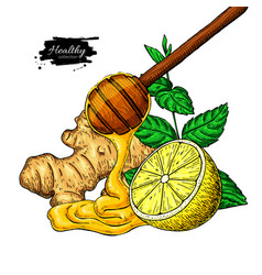 Honey ginger lemon and mint drawing vector
