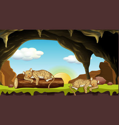 Scene with two cheetahs sleeping in cave vector