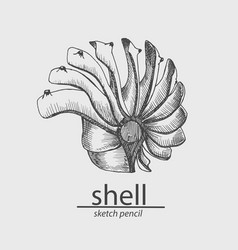sea shell marine resident animal sketch style vector image