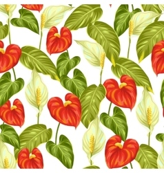 Seamless pattern with flowers spathiphyllum and vector