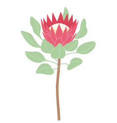 Simple pink protea isolated on white background vector