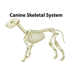 Skeletal system of a dog vector