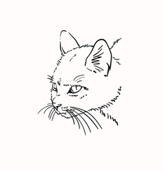 Sketch scary angry cat head hand drawn linear vector