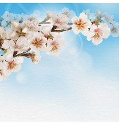 Blooming tree branch with pink flowers on bokeh vector image