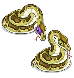 set of two mesh pythons one evil another sick vector image vector image