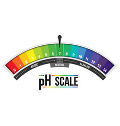Creative of ph scale value vector