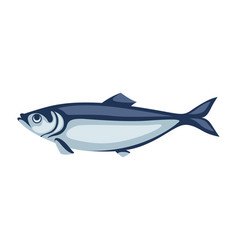 herring fish pacific sardine vector image