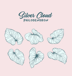 monstera silver cloud leaves hand drawn vector image