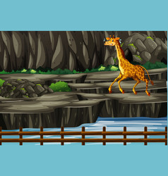 Scene with giraffe behind zoo cage vector