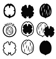 Walnut nutshell icons set vector