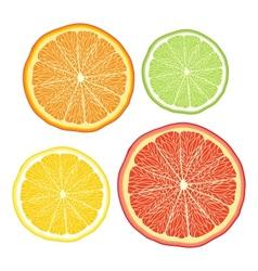 Stylised orange lemon grapefruit lime on white vector