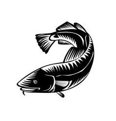 Atlantic cod gadus morhua or codling side view vector