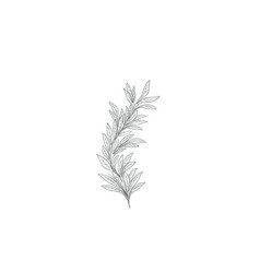 Branch with leaves sketch nature lush decor vector