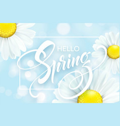 daisy flower background and hello spring lettering vector image
