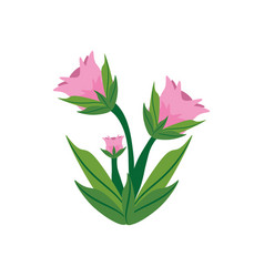 Peony flower spring image vector