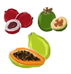 Polygonal tropical papaya feijoa lychee fruits vector image