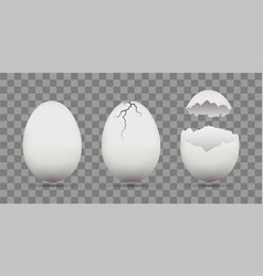 set of white chicken eggs shell with cracks vector image