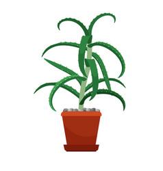 aloe vera houseplant in flower pot vector image vector image