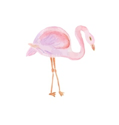 Watercolor painted of flamingo vector image