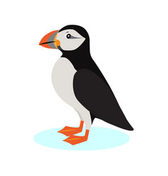 atlantic puffin icon polar bird with colorful vector image