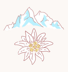 edelweiss mountains mountaineering flower symbol vector image