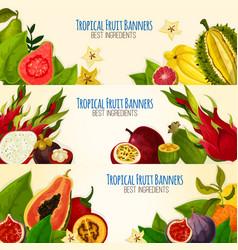 Exotic tropical fruit banner set for food design vector