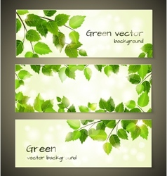Green leaves banners vector