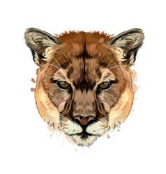 Puma cougar head portrait from a splash vector