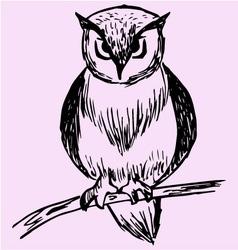 owl tree branch vector image vector image