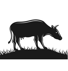 cow grazing on field black vector image