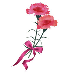 carnation bouquet with a red ribbon vector image