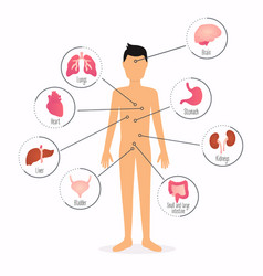 Human body with internal organs human body health vector