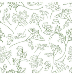 Natural seamless pattern with parsley leaves hand vector