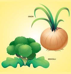 Vegetables onion brocolli vector