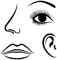 Eyes nose lips and ear icon vector