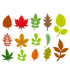 set colorful autumn leaves isolated on white vector image