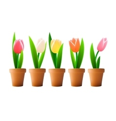 Tulip flowers isolated vector image