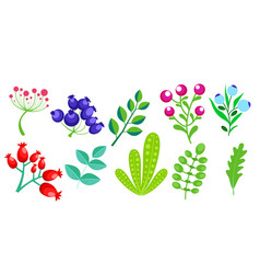 colorful floral elements vector image vector image