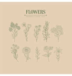 Flower Herbarium Hand Drawn Realistic Sketch vector