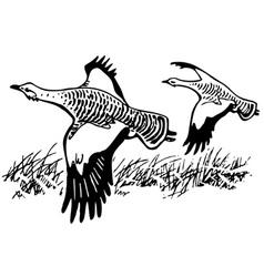 great bustard bird vector image vector image