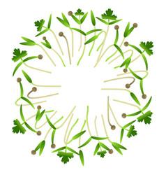 Microgreens cilantro arranged in a circle white vector