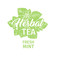 Herbal tea with fresh mint logo template isolated vector