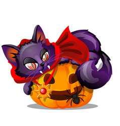 Purple cat with bared fang lying on jack-o-lantern vector